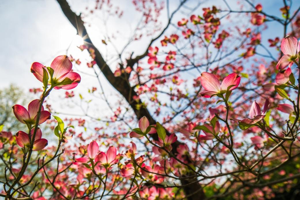 Flowers - 001 (4-14-2017)